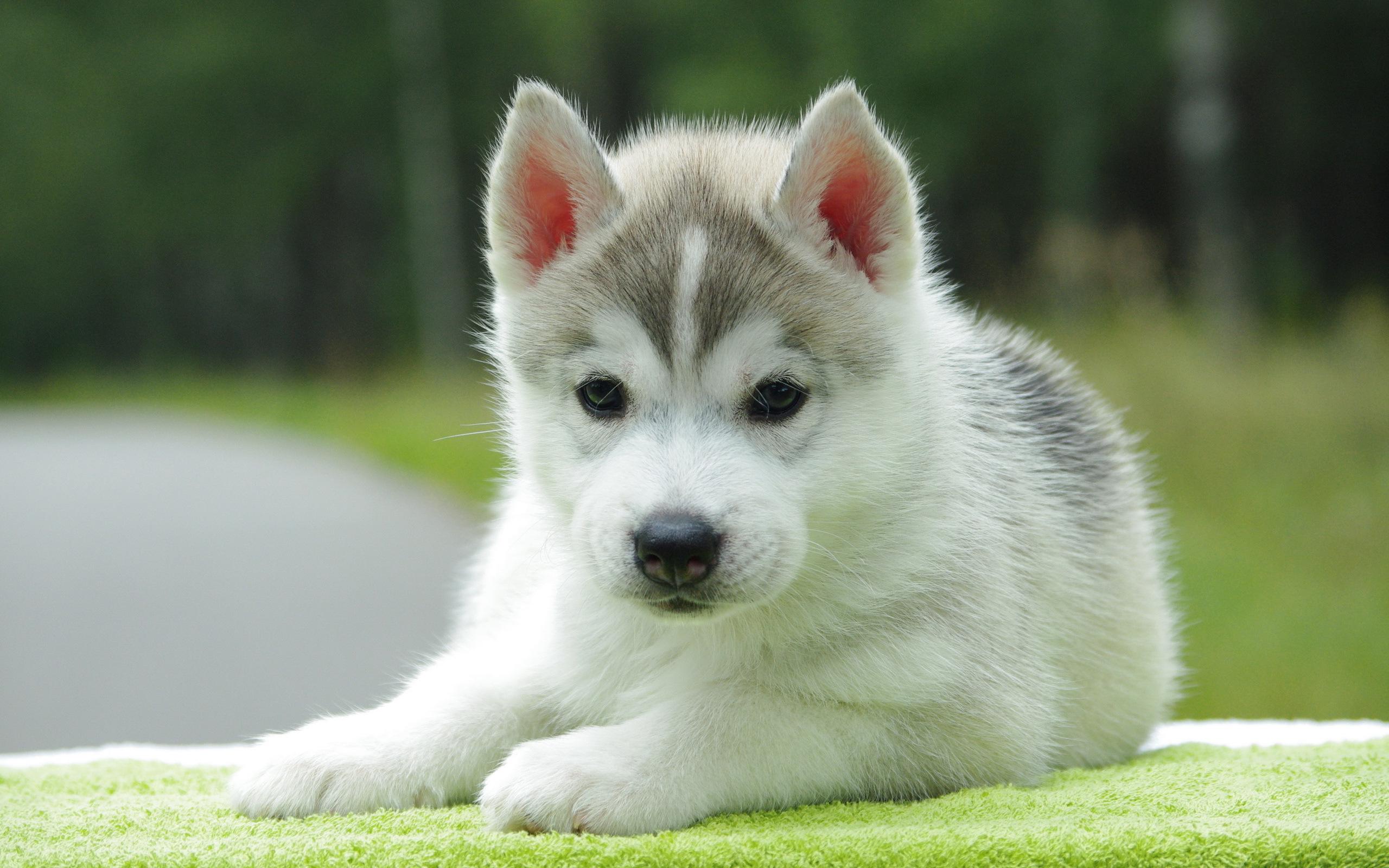 красивая собака скачать