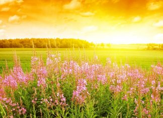 Field-of-Flowers-hd-wallpapers