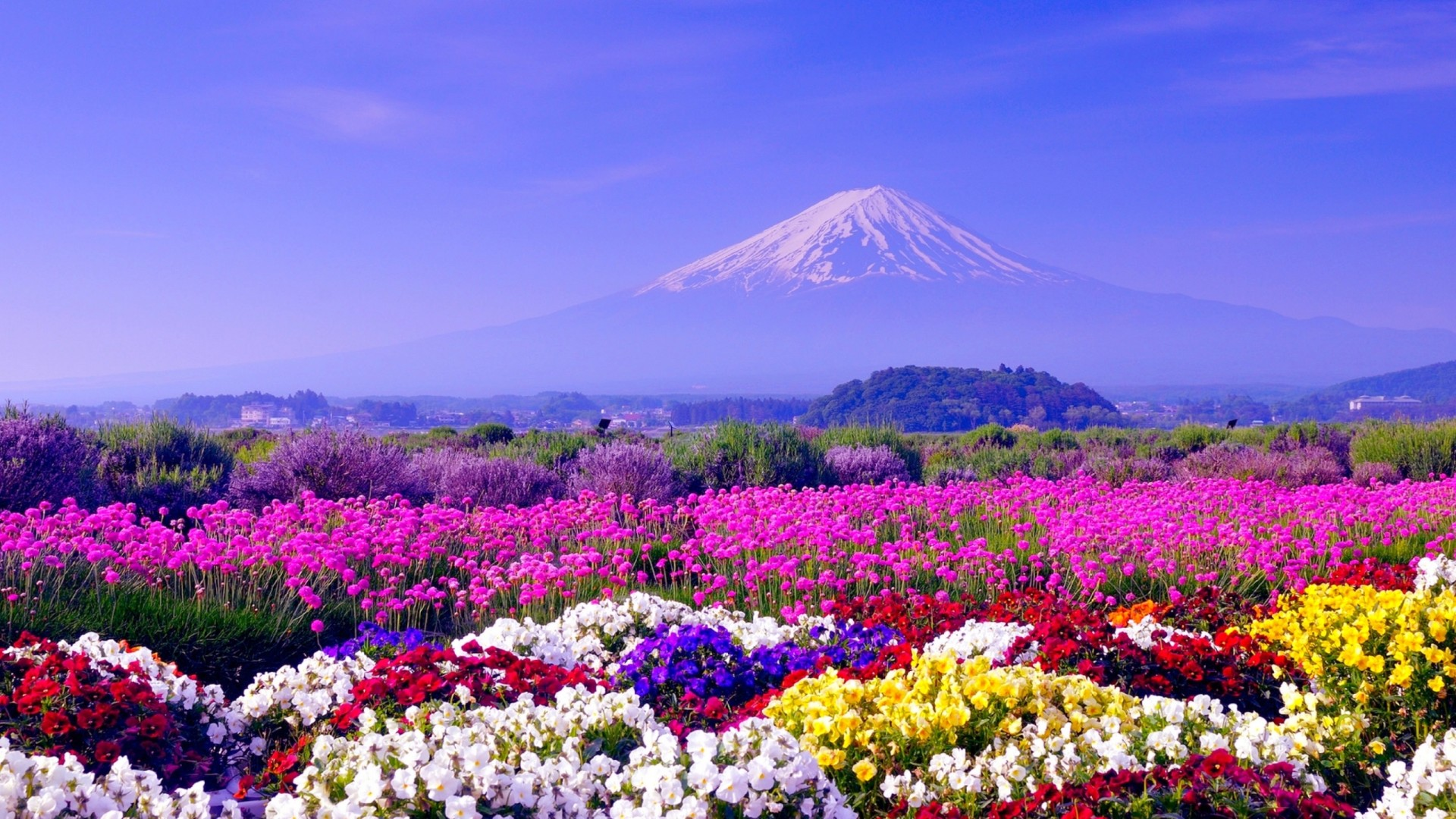 Free Hd Wallpapers: Spring In Japan Wallpapers HD Free Download