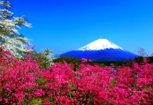 Spring mountain flowers fuji nature Japan spring hd wallpaper