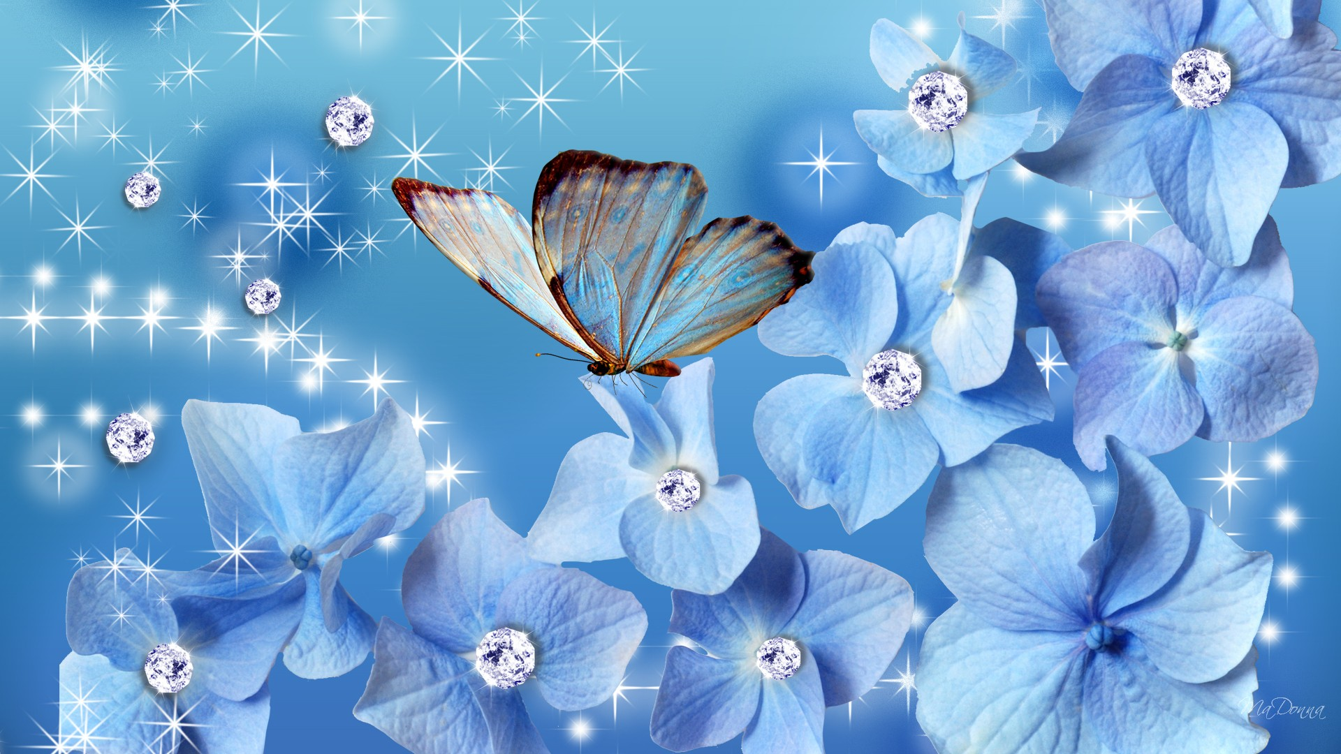 Blue Butterfly Wallpaper Hd Pixelstalk Net