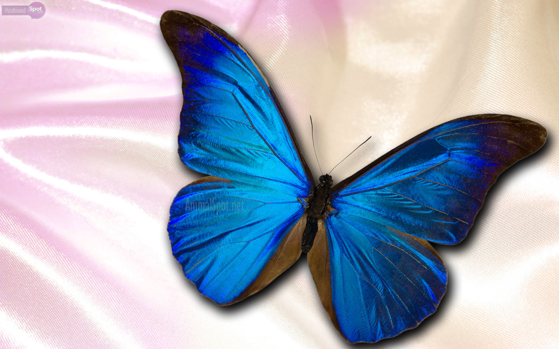 blue butterfly wallpaper hd | pixelstalk