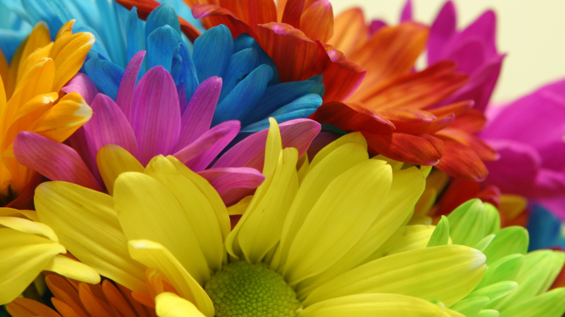 Colorful Flowers Wallpapers Hd Pixelstalk