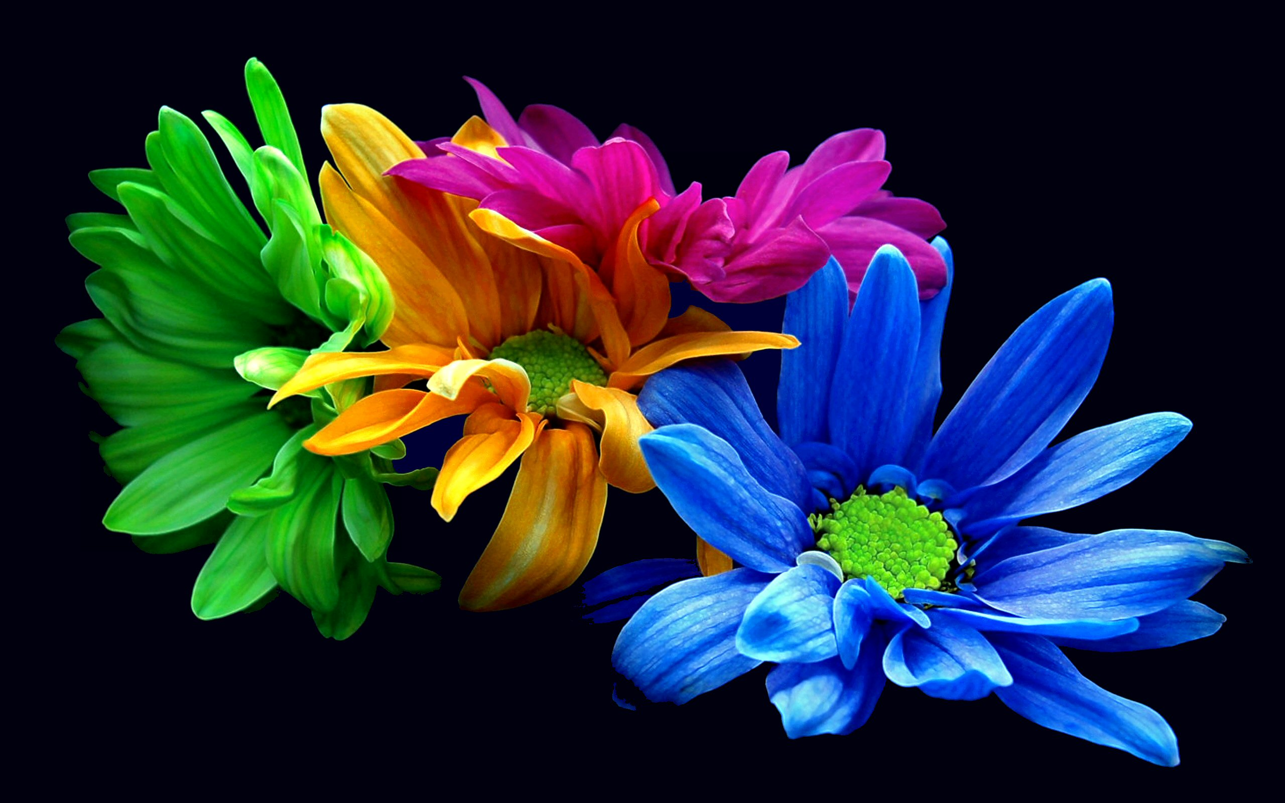 Colorful flowers wallpapers hd pixelstalk colorful flowers wallpapers hd voltagebd