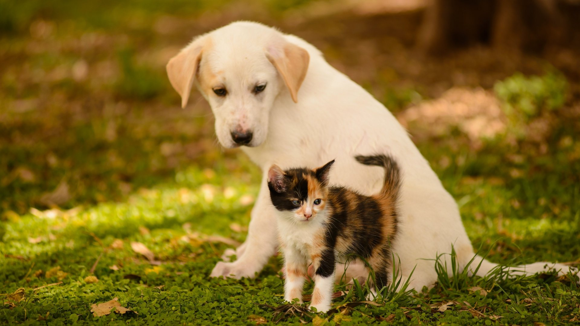 cute dog and cat wallpaper | pixelstalk