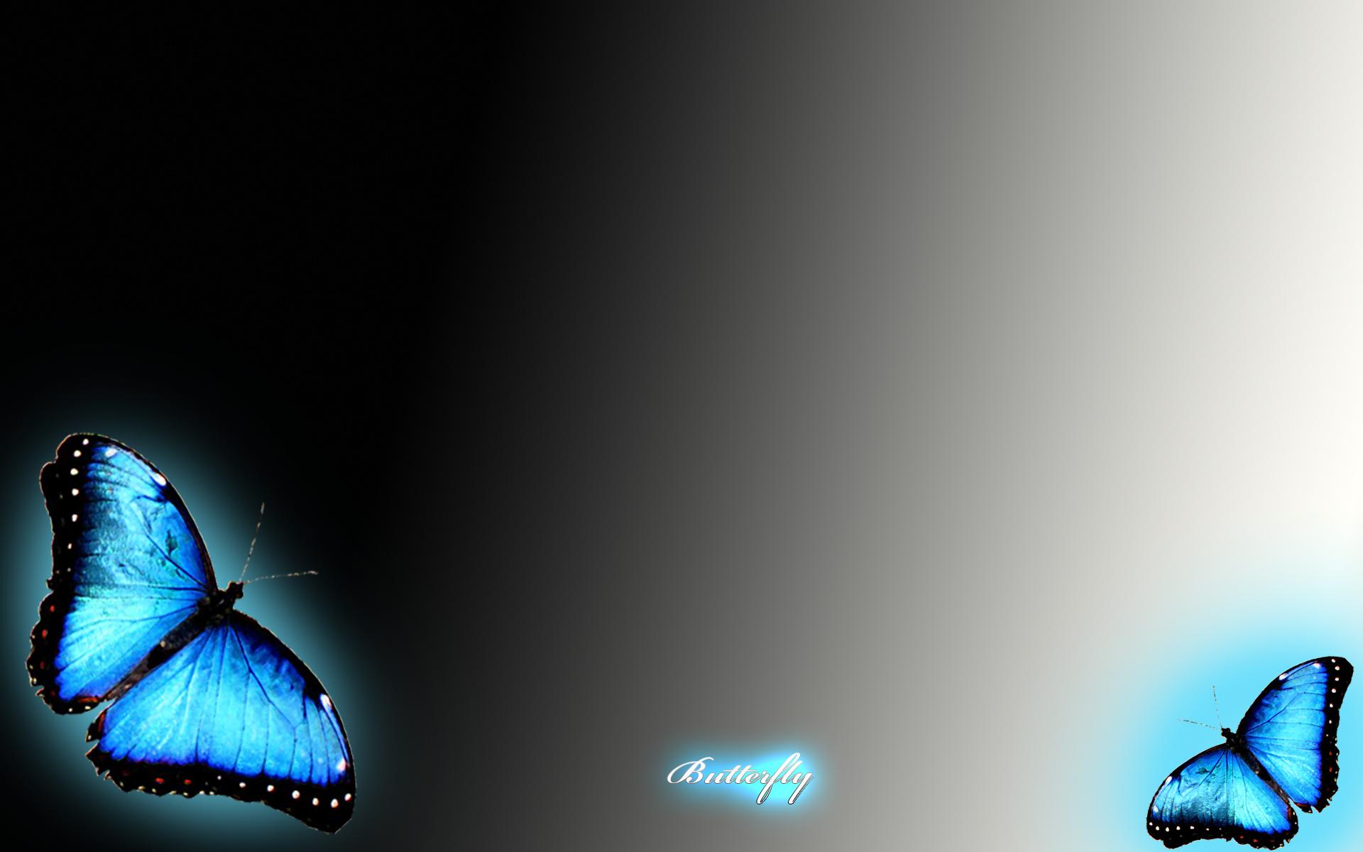 Blue Butterfly Wallpaper HD | PixelsTalk.Net Wallpapers Of Butterflies