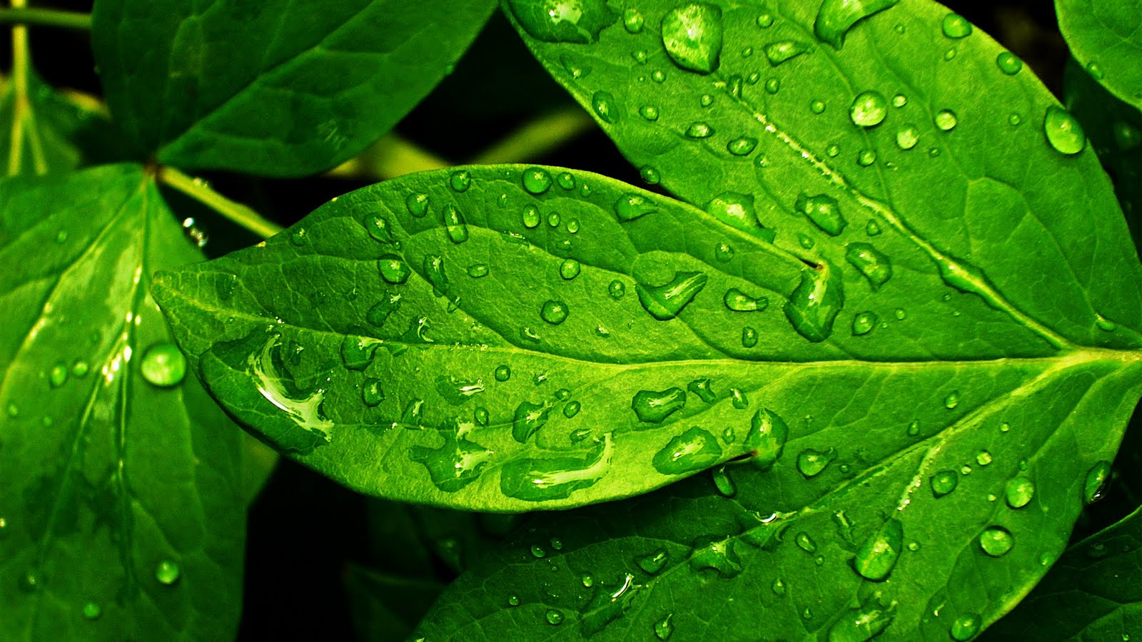 green leaves wallpapers | pixelstalk