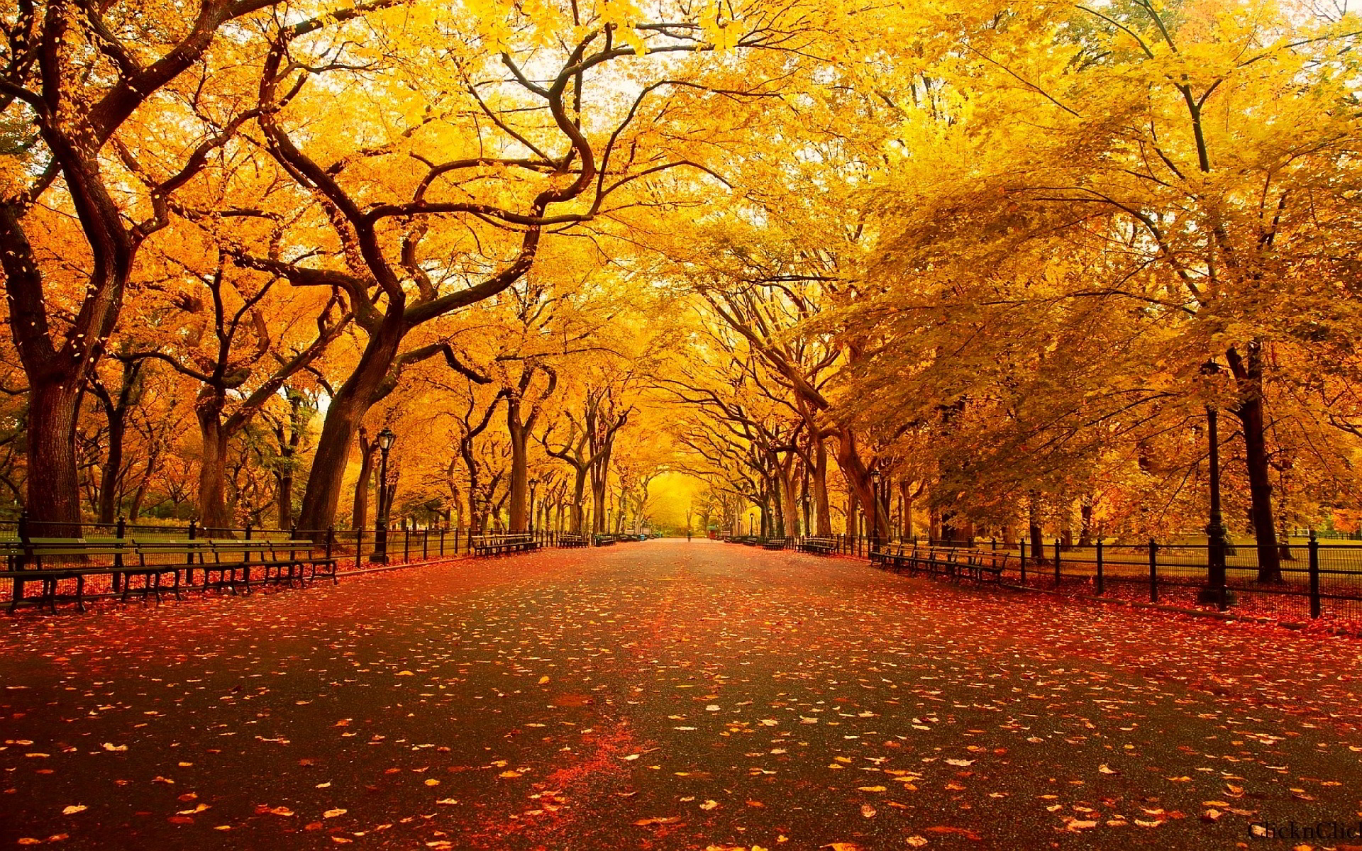 HD Autumn Wallpapers.