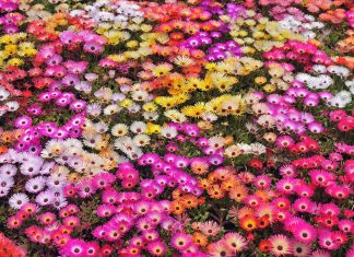 Nature flowers garden petals colors abstract plants wallpaper.