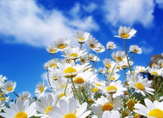 Summer Flowers Blue Sky Wallpapers.