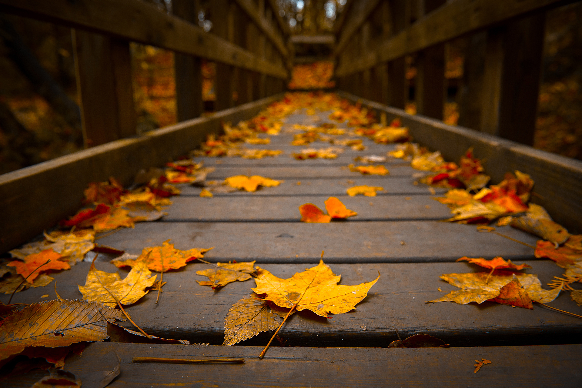 autumn wallpaper HD download.