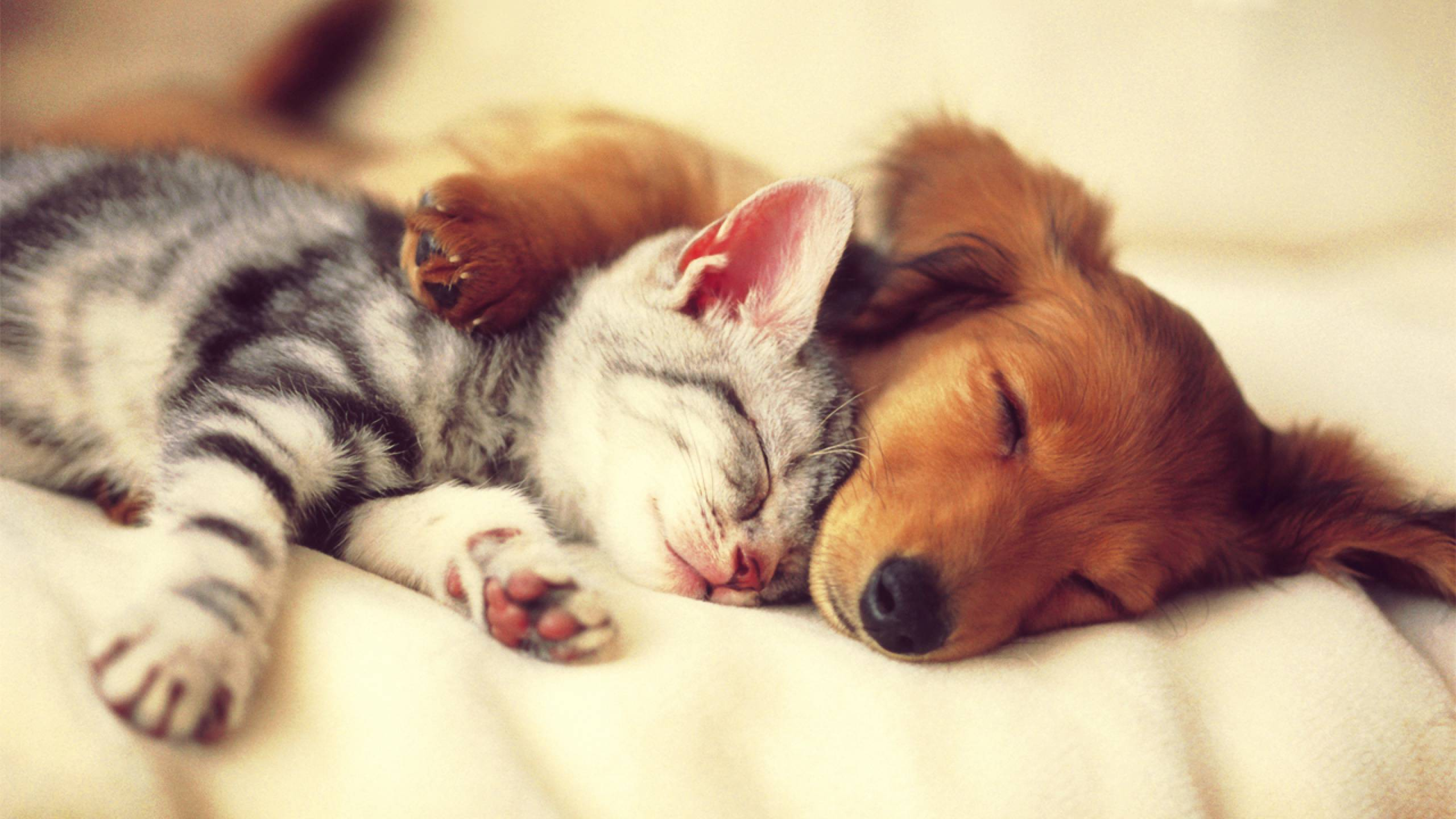 Cute Cat And Dog Sleep Wallpaper