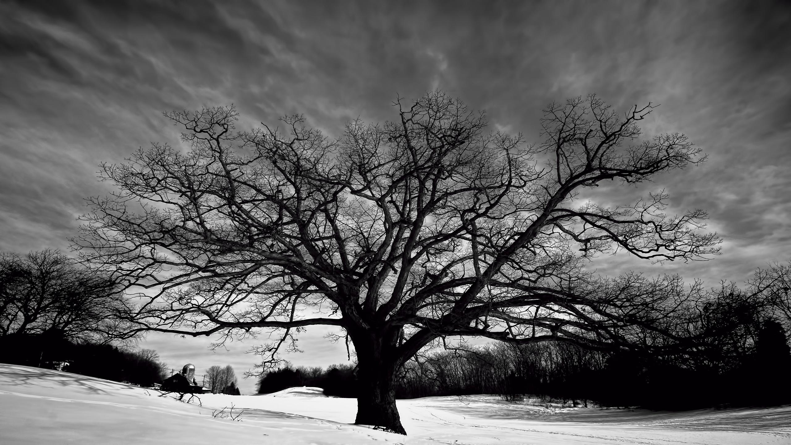 Tree wallpaper black and white hd wallpapers backgrounds images