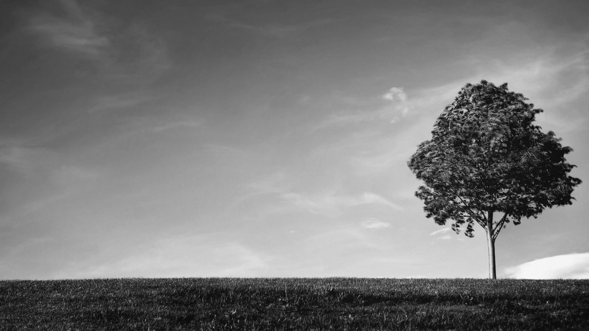 Tree Wallpaper Black And White Pixelstalknet