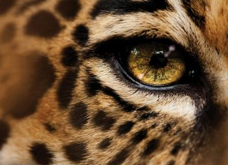 Cheetah wallpapers HD pics photos download.