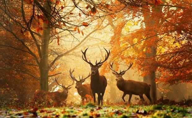Deer backgrounds wallpapers HD.