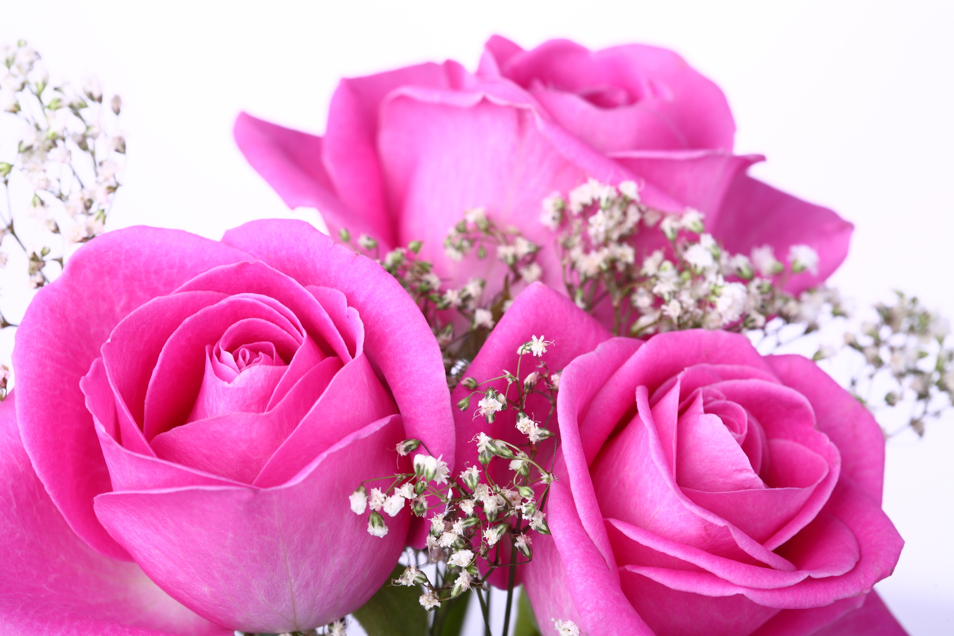 Pink Rose Pictures Download Free