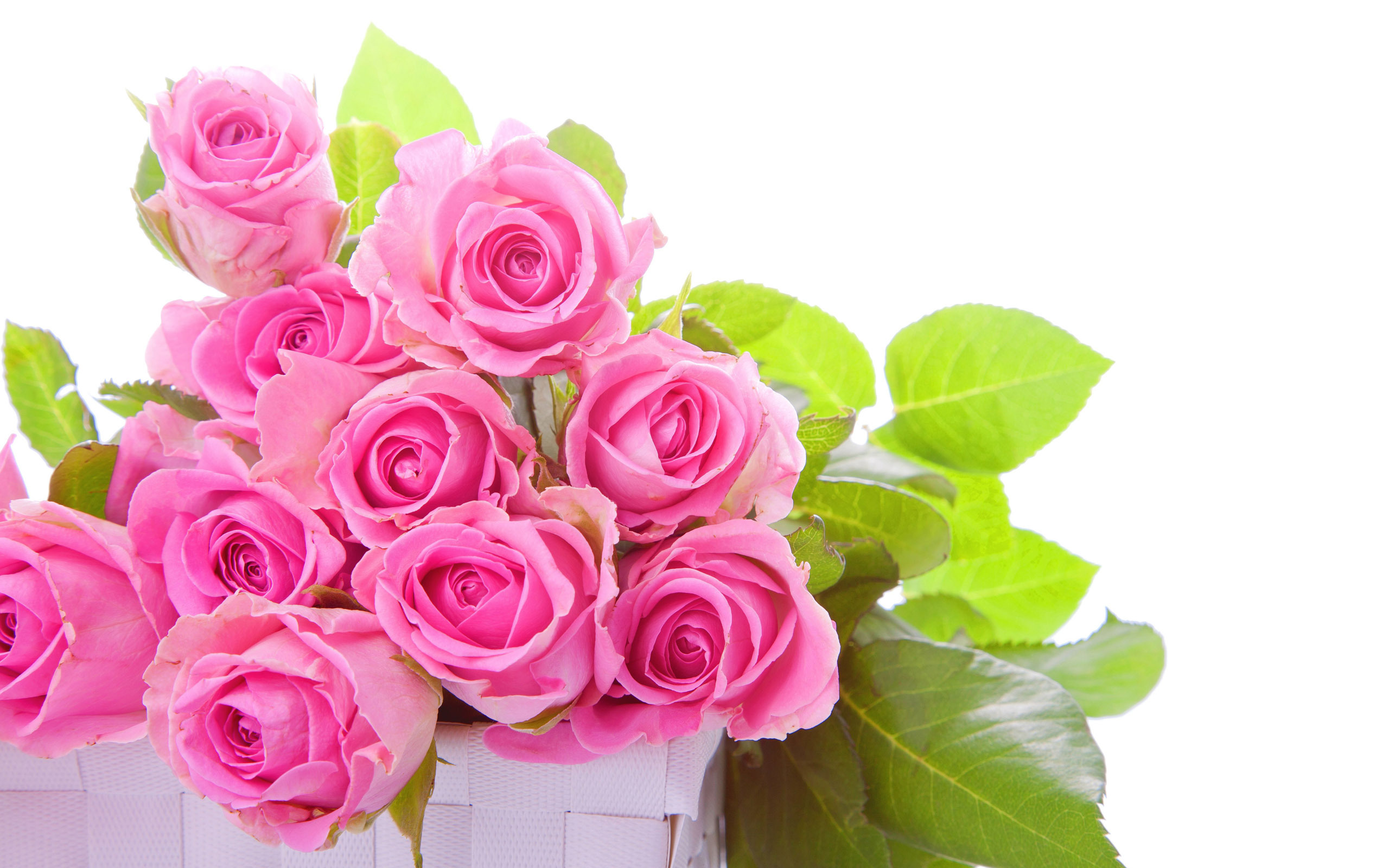 Pink rose pictures download free pixelstalk pink rose flower images pictures hd wallpapers izmirmasajfo