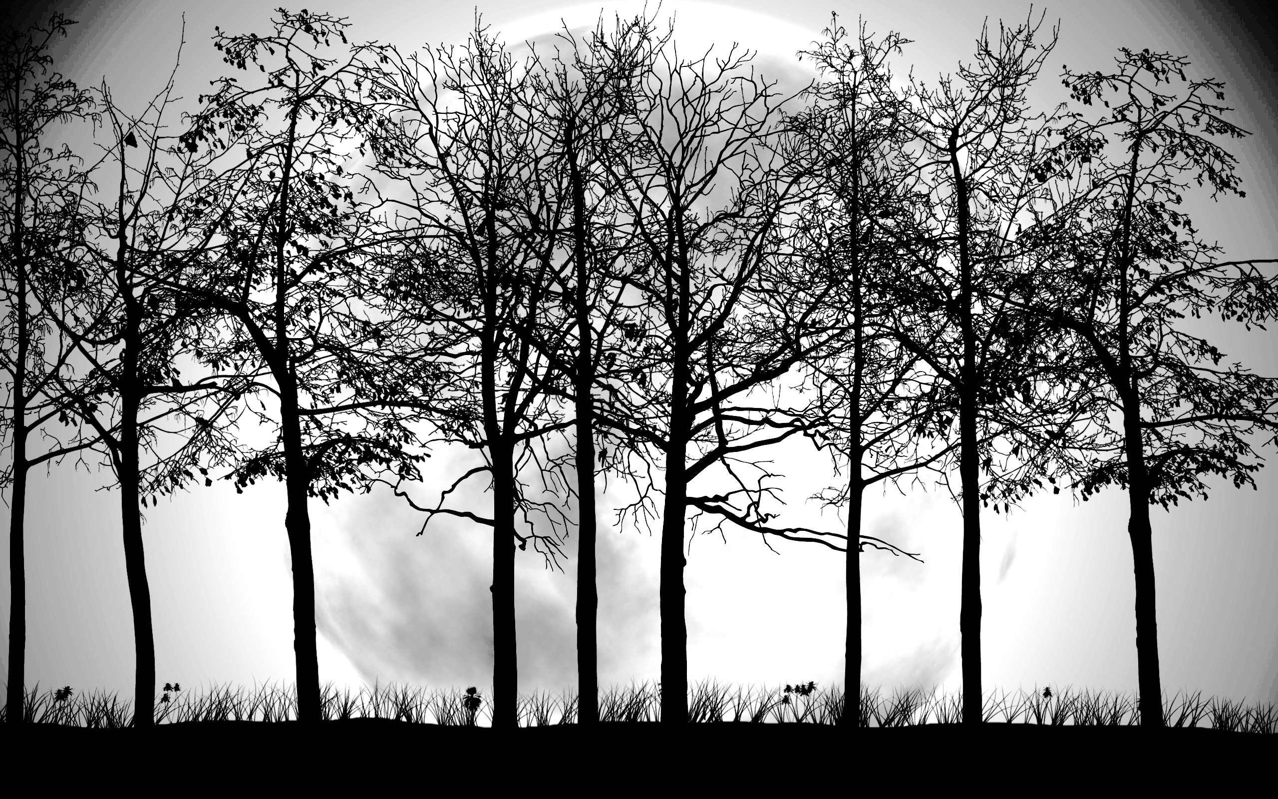 Tree Black and White Wallpapers. Original Size.