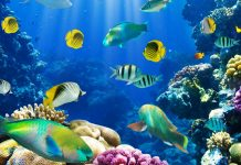 Underwater fish fishes tropical ocean sea reef wallpapers HD.