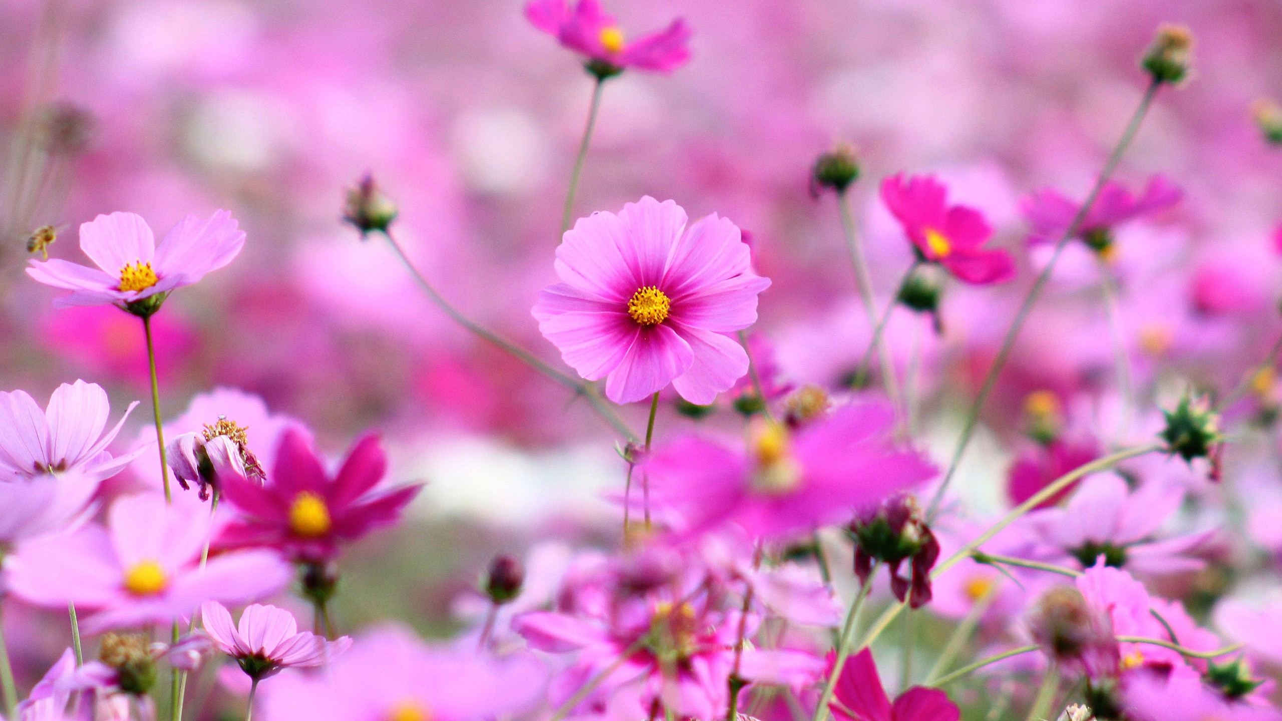 free flowers wallpaper for phone
