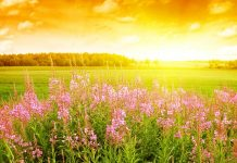 Beautiful Summer HD Wallpaper.