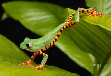 Bing Best Wallpapers HD Lemurfrog.