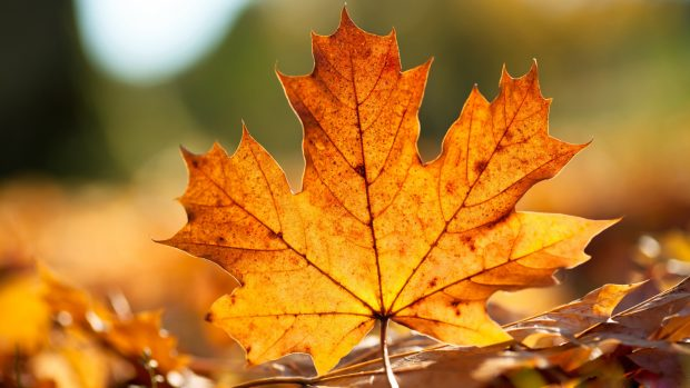 Desktop autumn fall leaves wallpapers hd.