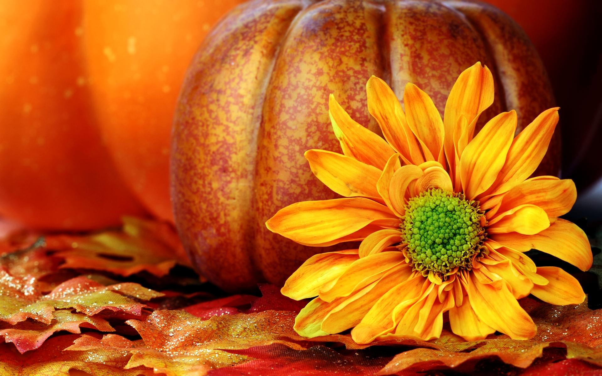 Fall pumpkin desktop wallpaper high.