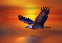 Image for Eagle Wallpaper Free.