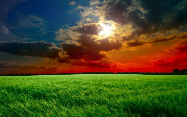 Red Sunset Fields Wallpaper in 1440x900 Widescreen.