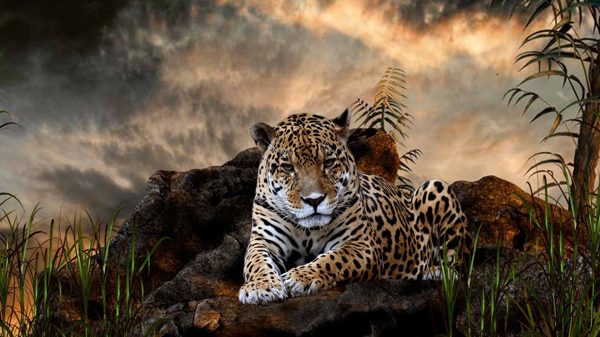 Leopard wallpapers hd pixelstalk net - Hd wilderness wallpapers ...