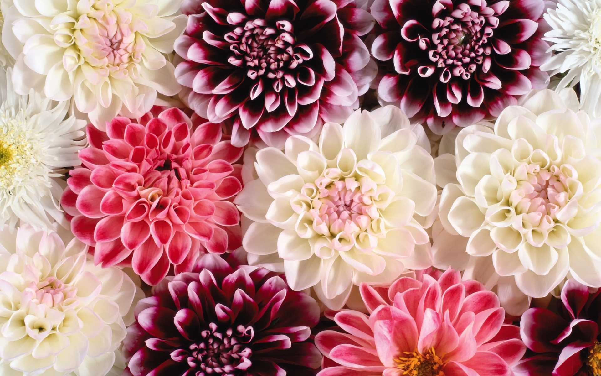 Flower Backgrounds Free