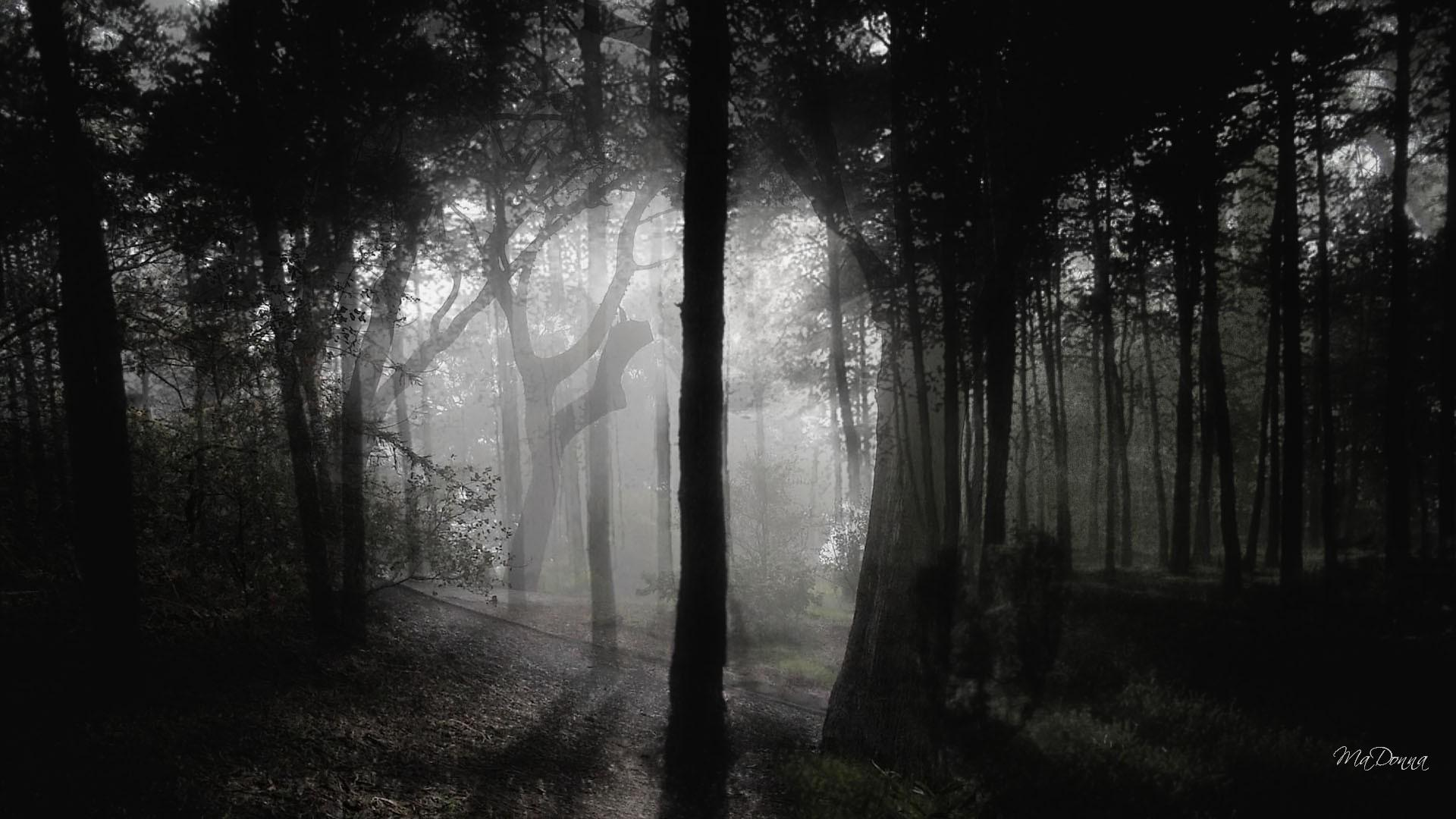 Dark Woods Images.