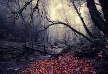 Dark Woods Picture HD.