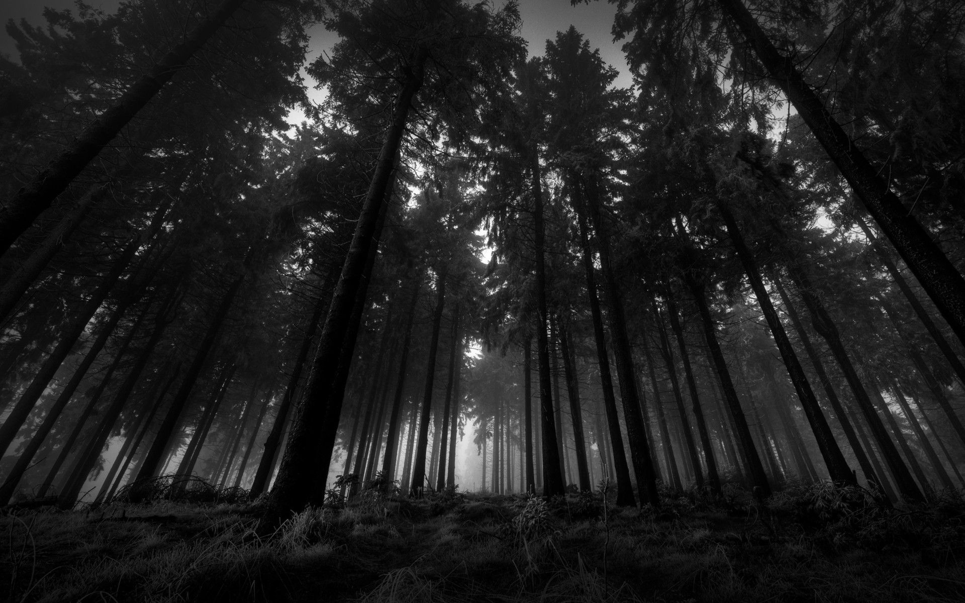dark woods hd backgrounds pixelstalk net