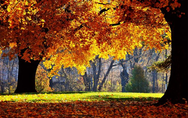 Desktop Fall Pictures High Quality Photo HD.