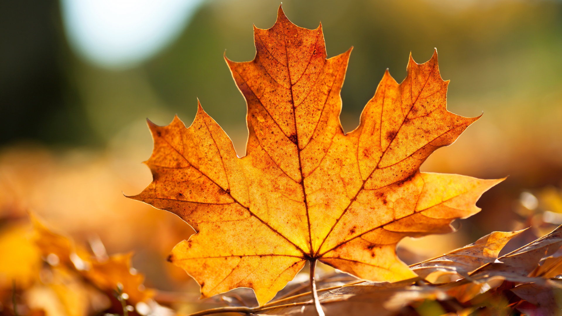 Desktop autumn fall leaves photos hd.