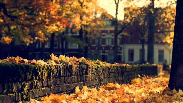 Desktop fall backgrounds images download.