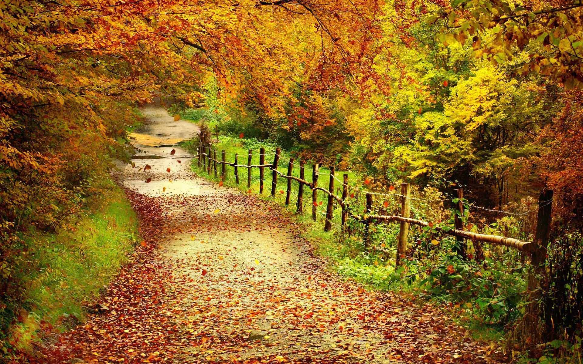 Desktop wallpapers fall colors hd high.