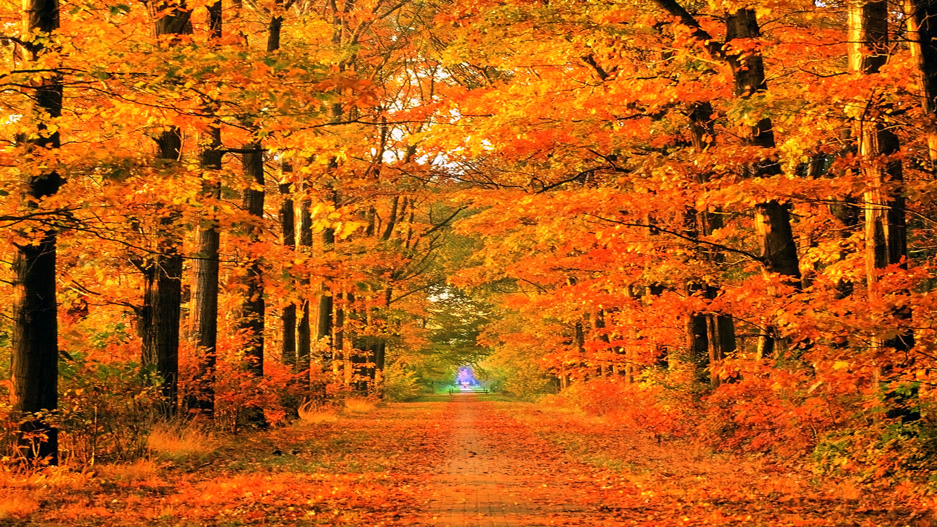 Fall Wallpapers Hd Pixelstalk Net