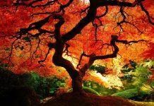Fall Tree HD Wallpaper Download.