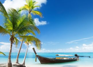 Pictures Download Beach Palm Tree Wallpapers.