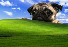 Pug Desktop Backgrounds.