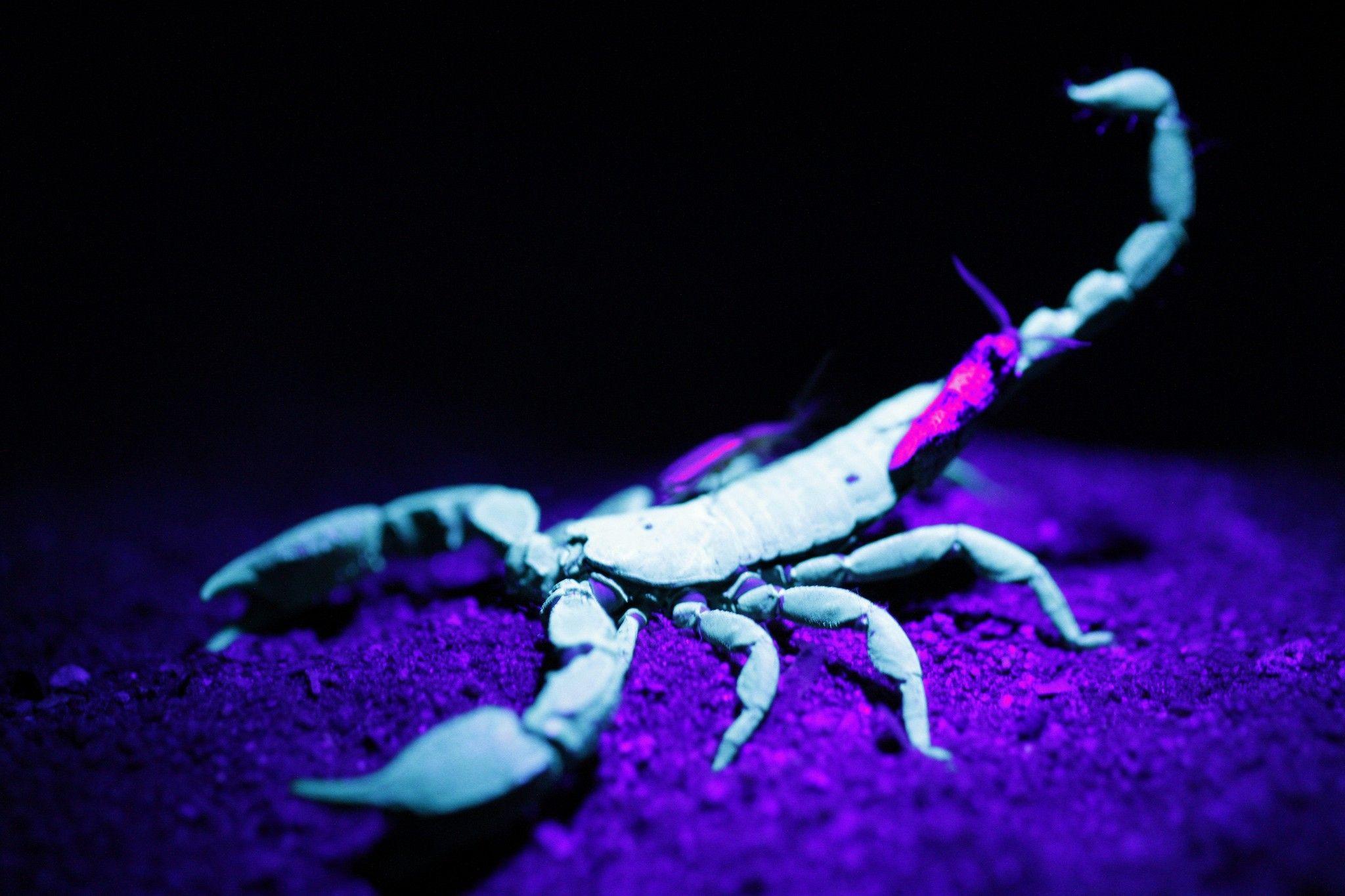 Scorpion HD Desktop Wallpapers