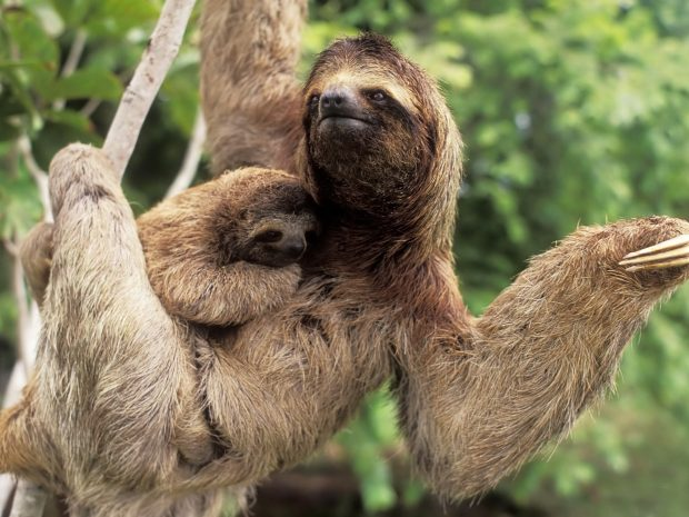 Sloth Images.