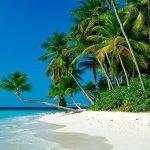 Tropical palm beach wallpaper hd.