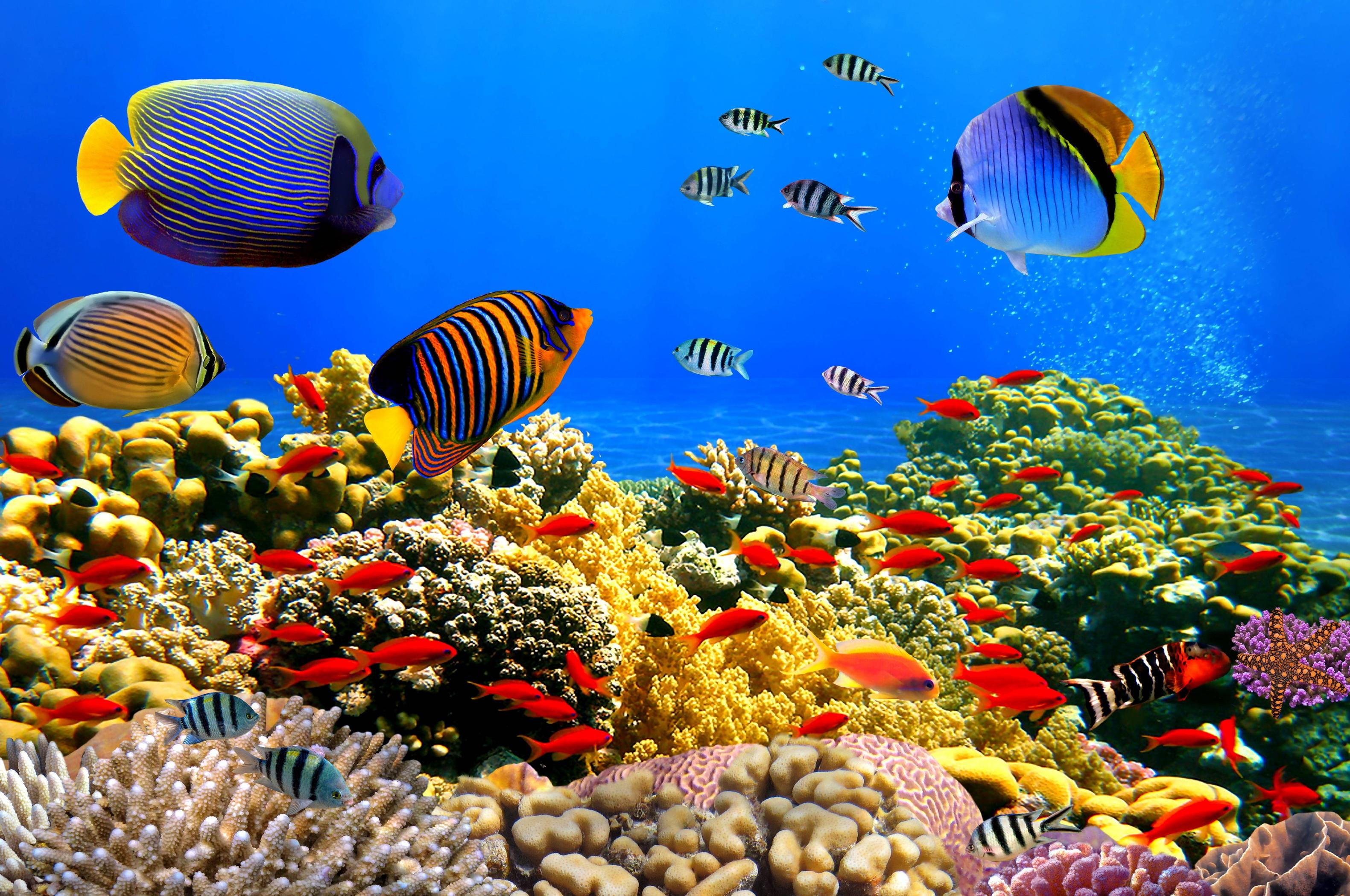 Underwater wallpaper download free pixelstalk net - Underwater desktop background ...