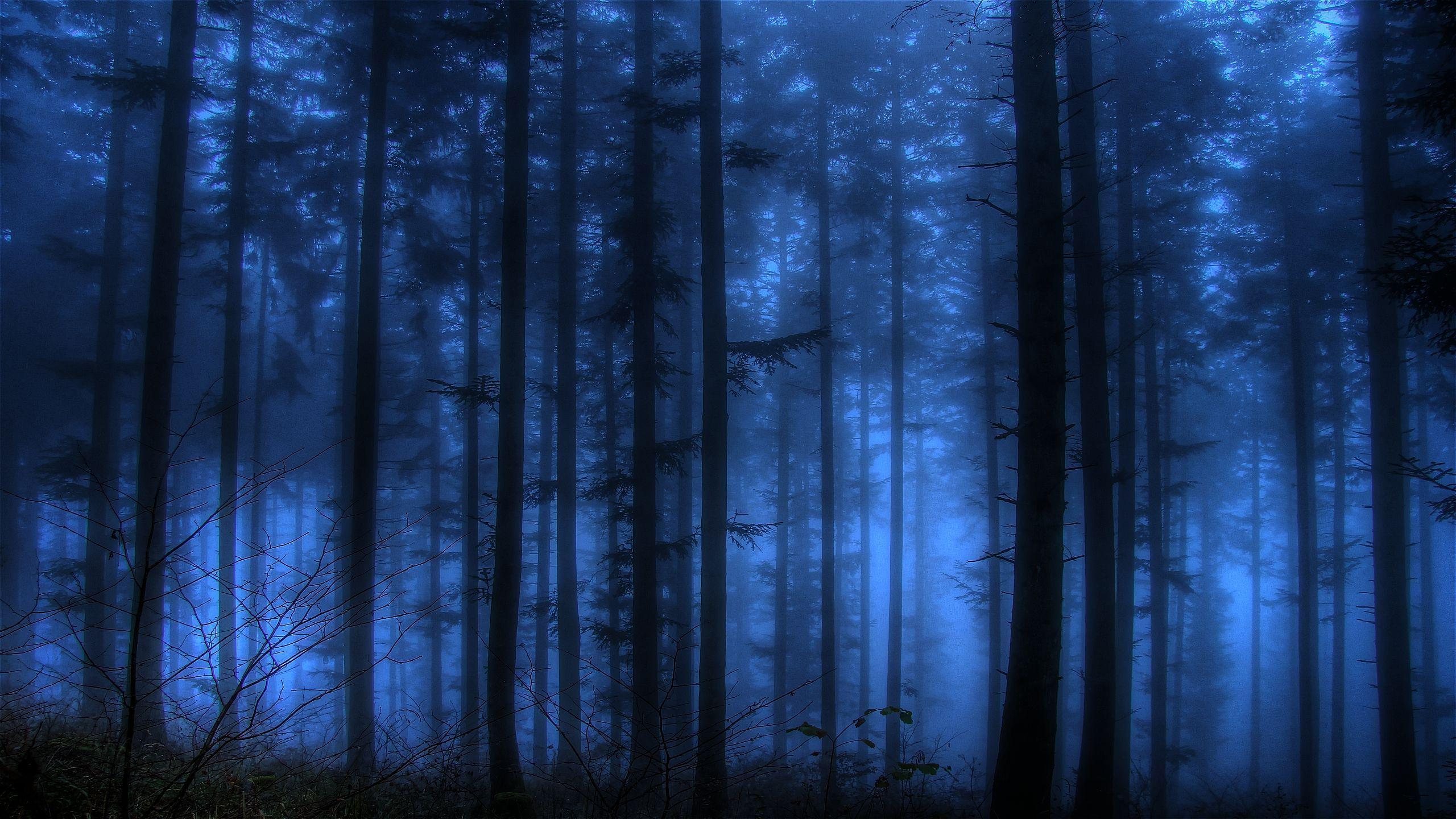 Imagespace Dark Forest Wallpaper Desktop Gmispace Com