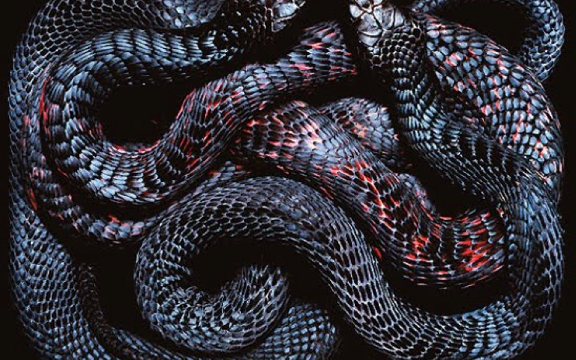 viper snake backgrounds hd | pixelstalk